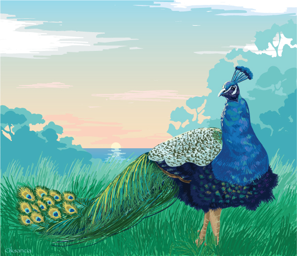 Peacock at the sunset vector illustration by Oksancia