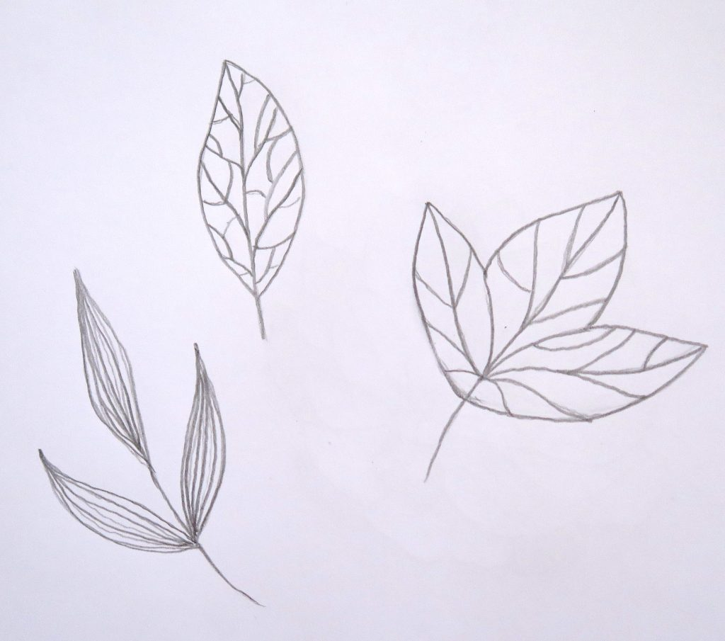 Pencil sketch of leaves for how to turn a sketch into a vector in adobe illustrator